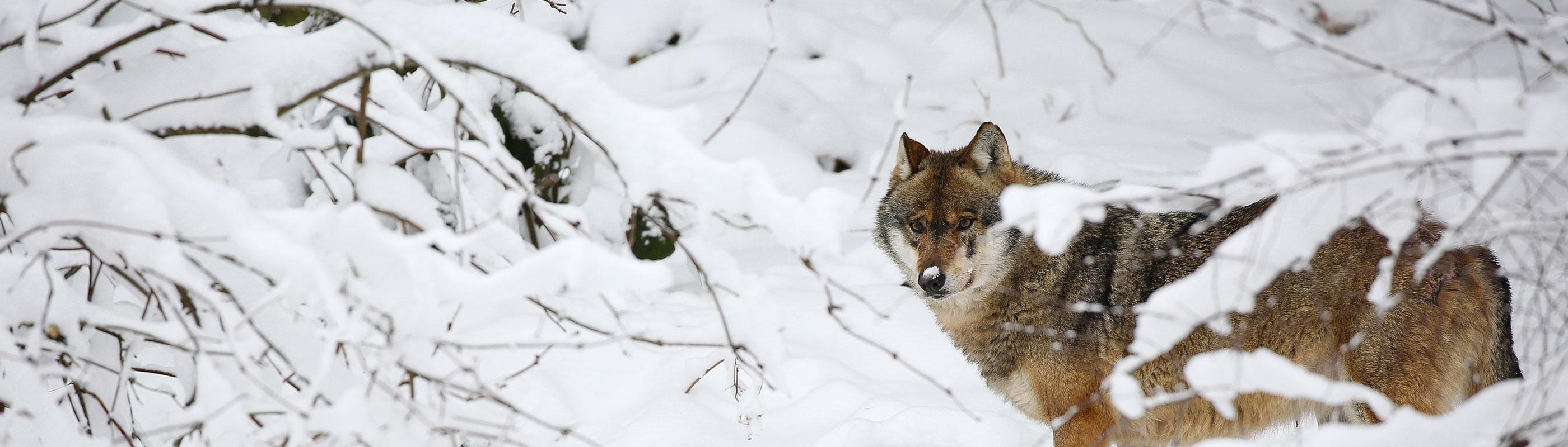 Dierenfotografiereizen-slider