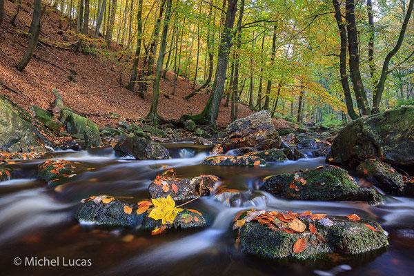 HogeVenen herfstfoto7-600px