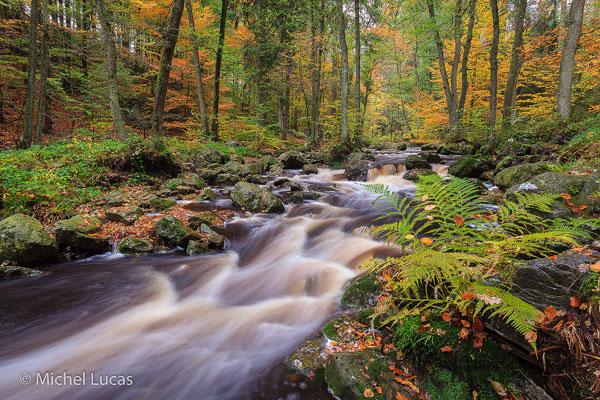 HogeVenen herfstfoto8-600px